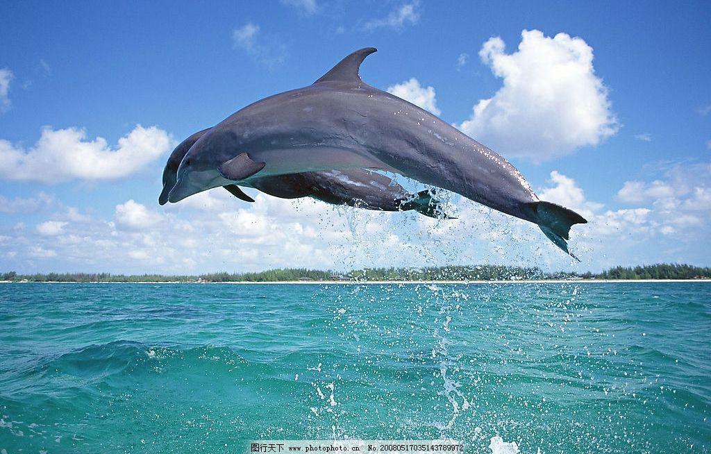 跳跃的海豚 海水 生物世界 海洋生物 海洋动物 摄影图库