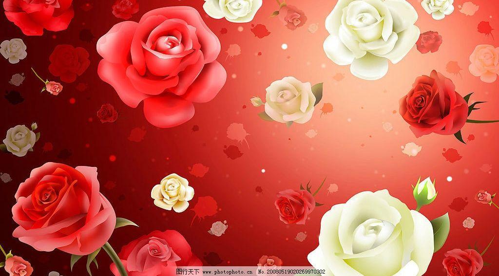 玫瑰 底图 花 红底 花纹 花朵 其他 图片素材 设计图库 72 jpg 底纹