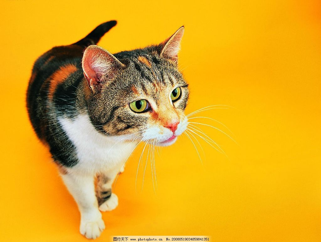 壁纸 动物 猫 猫咪 小猫 桌面 1024_773