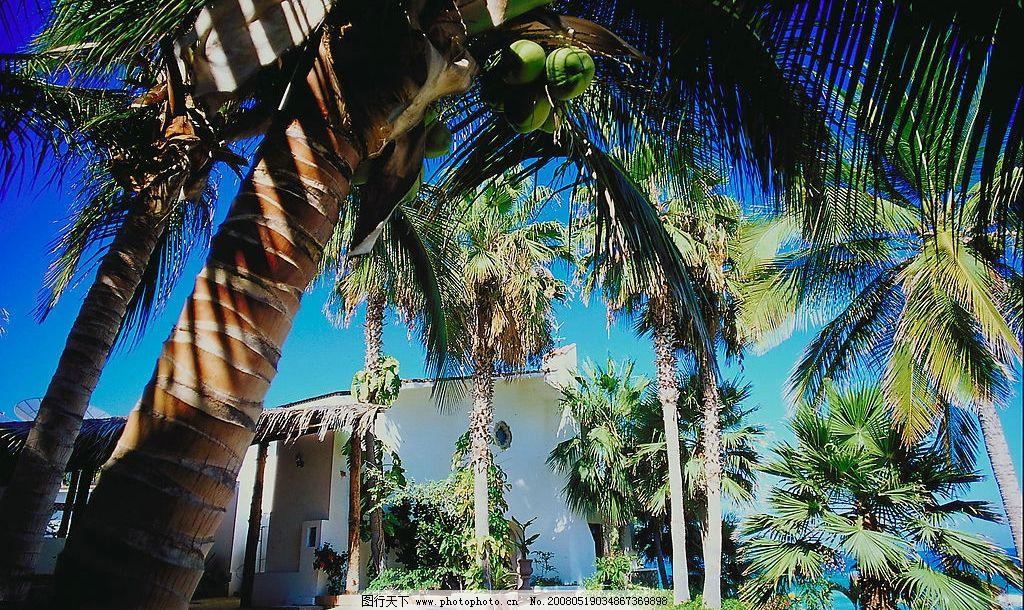 海滨风光 海边 椰子树 海滨 海边小镇 海南 自然景观 自然风景 摄影