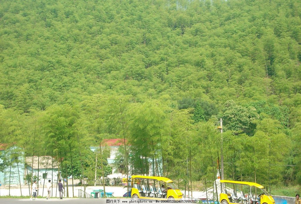 竹海 自然景观 自然风景 湖州安吉 摄影图库