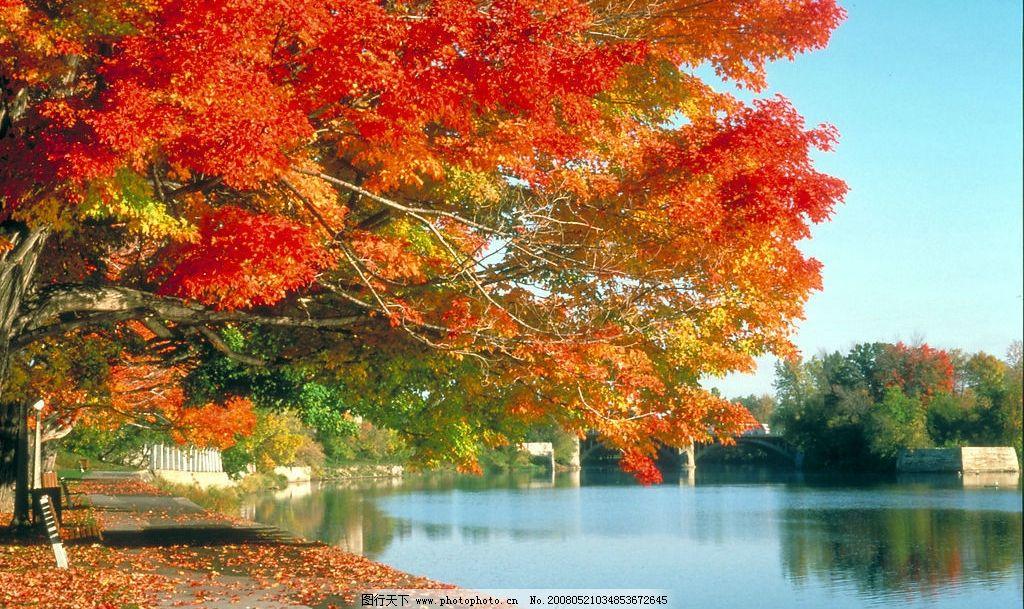 自然风景 枫树 绿水 自然写真 摄影图库 300 jpg 300dpi 自然景观