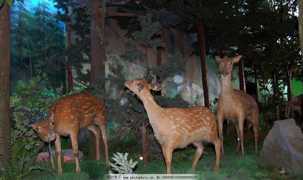 群鹿 自然博物馆 生物标本 模拟 动物 生物世界 野生动物 摄影图库 30