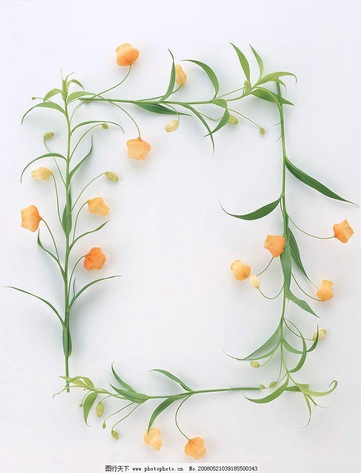 花草边框图片