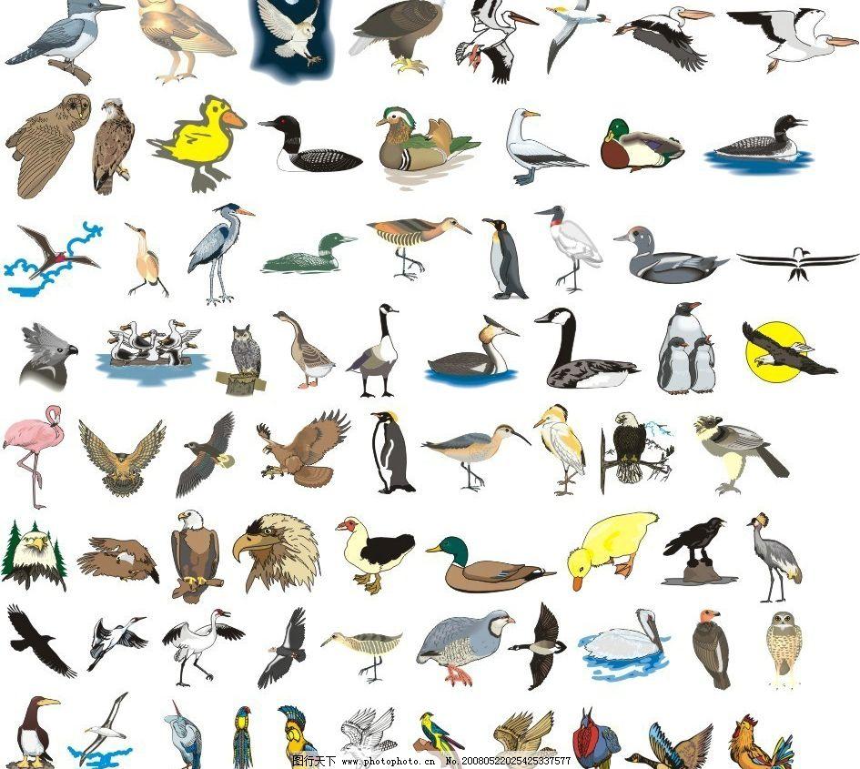 243种鸟类形态的矢量图 鸡鸭鹅 小鸟 飞 其他生物 矢量图库