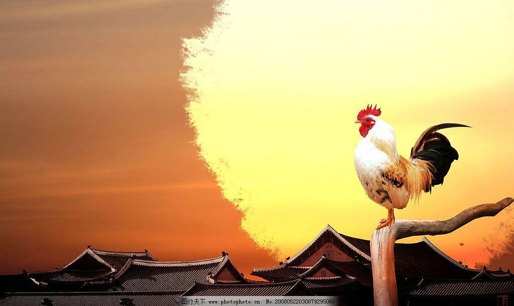 雄鸡报晓 雄鸡 屋顶 枯干 广告设计模板 国外广告设计 源文件库 72