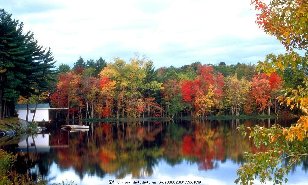 自然风景 枫树 湖水 自然写真 摄影图库 自然景观