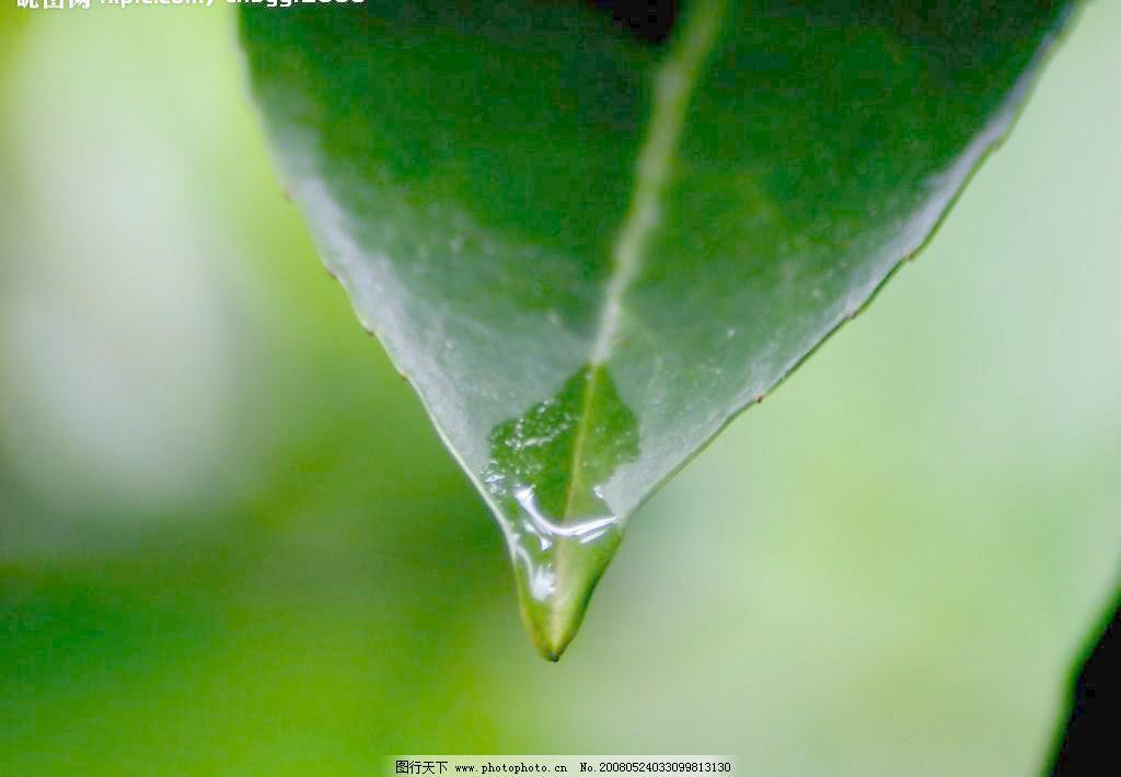 植物叶子图片免费下载 150 JPG 高清晰 绿叶 摄影图库 生物世界 树木树叶 树叶 水滴 叶子 植物叶子图片素材下载 植物叶子 绿叶 树叶 叶子 水滴 生物世界 树木树叶 高清晰 摄影图库 150 jpg