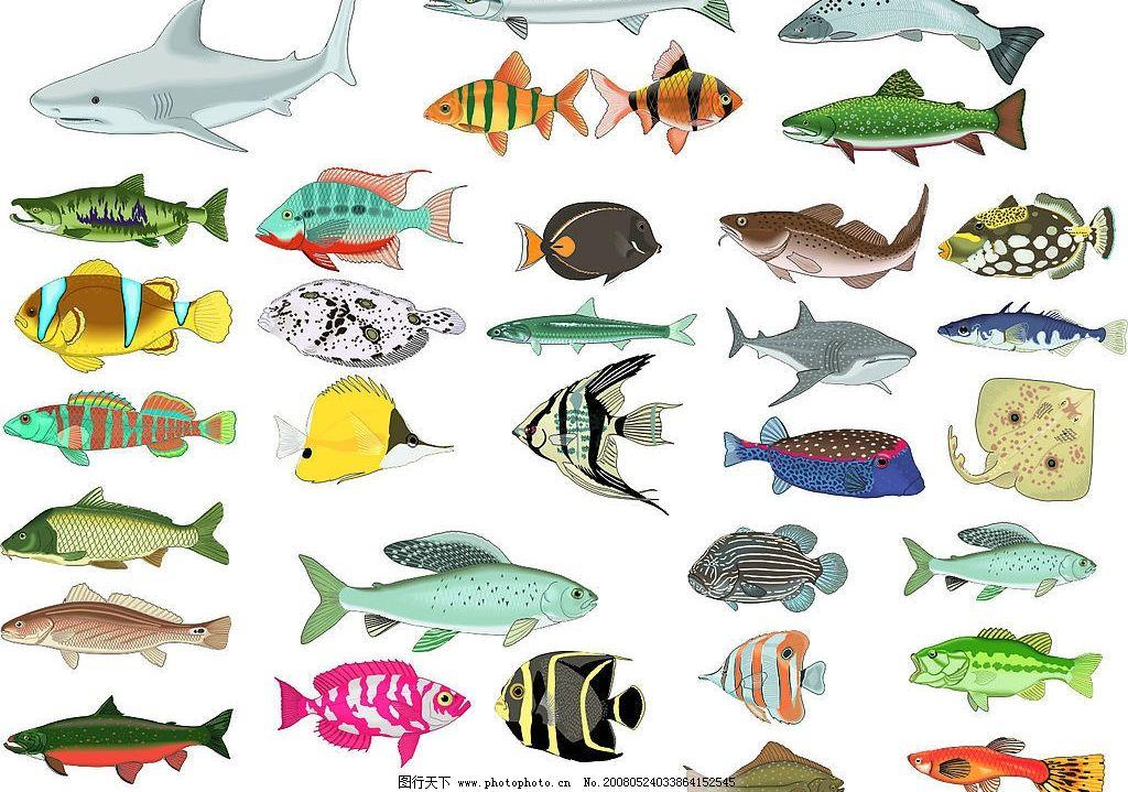 鱼的世界 CDR格式 鱼 鲨鱼 动物世界 海洋生物 鲸鱼 金鱼 电鱼 草鱼 带鱼 其他矢量 矢量素材 矢量图库 矢量图 0 CDR