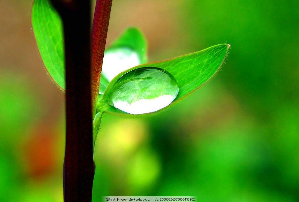 树叶水滴图片