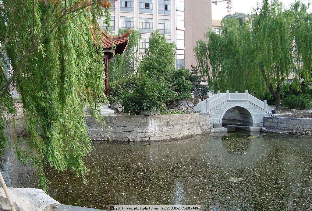 小桥 柳树 自然景观 自然风景 风景 摄影图库 72 jpg