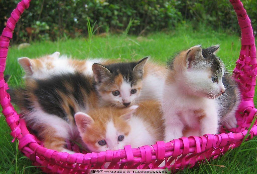 小猫们 宠物 篮子 草地 一窝 其他生物 摄影图库