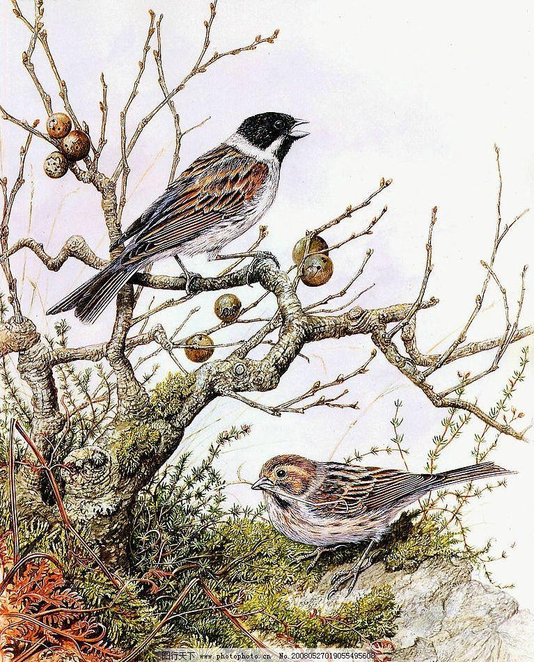 油画 鸟 树枝 文化艺术 绘画书法 设计图库 150 jpg