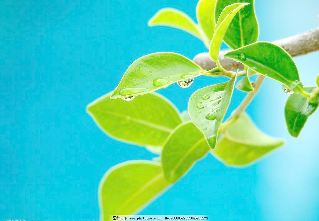特写 田园风光 植物叶片图片素材下载 植物叶片 植物 植物叶子 绿叶