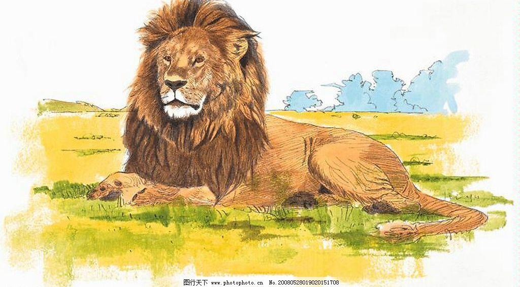 工笔画 兽中之王 狮子 野生动物 文化艺术 绘画书法 动物 设计图库