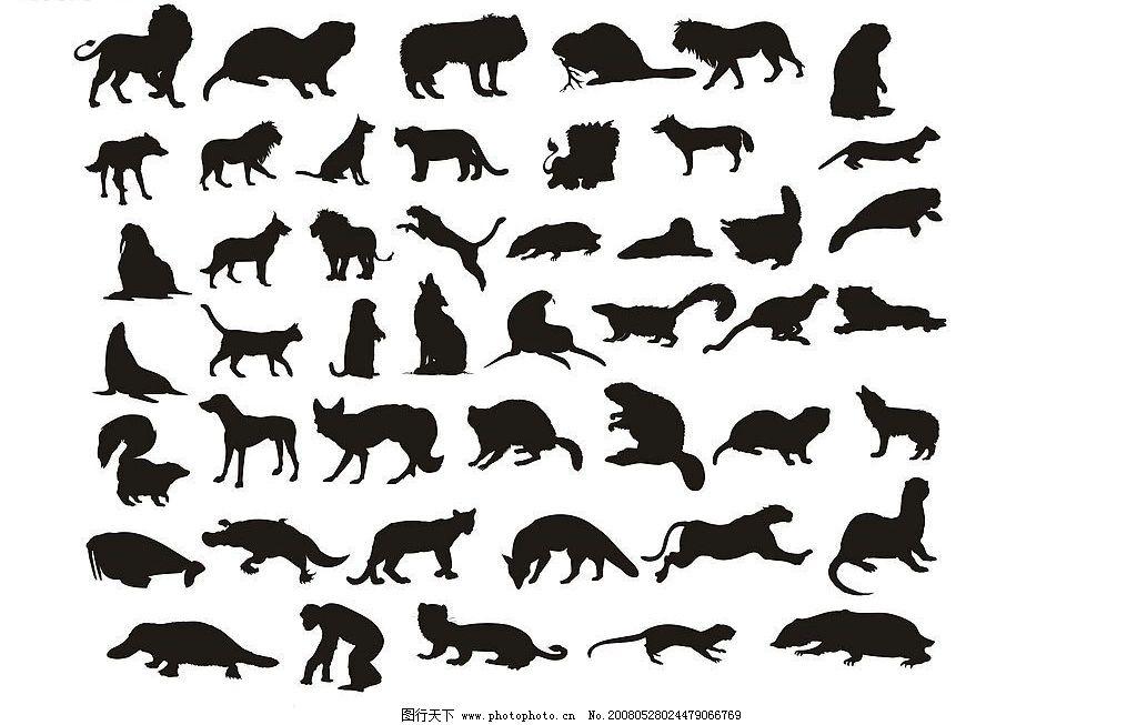 各种动物的大小比较