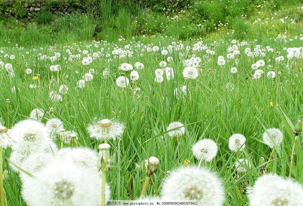 绿色花草图片,自然 草地 鲜花 自然景观 自然风景-图