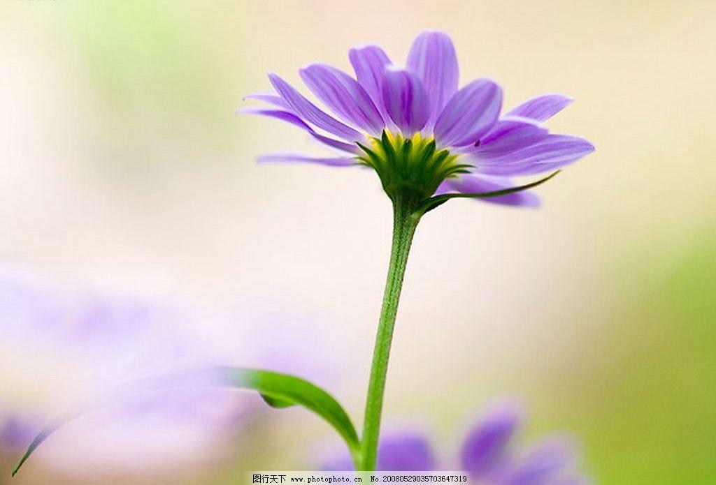 美丽的花 花香 鲜花 大自然 田野 花朵 鲜艳夺目 自然景观 自然风景