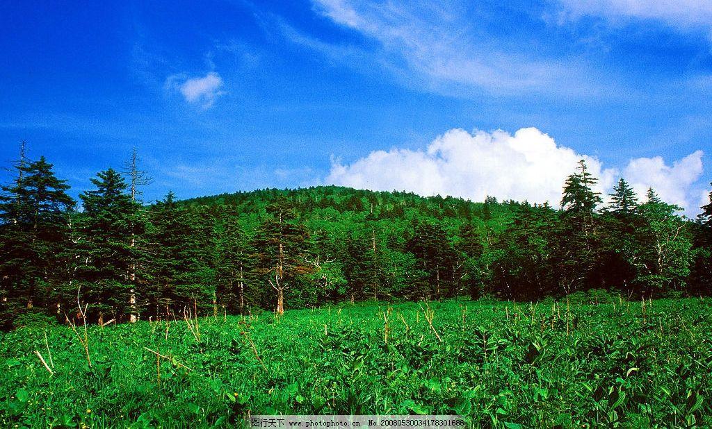 蓝天森林 天空森林近景还有小树 旅游摄影 摄影图库