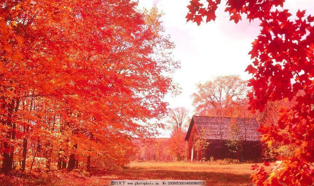 枫树之家 乡间小路 枫树 枫叶 乡间小屋 红色 自然景观 自然风景 就是