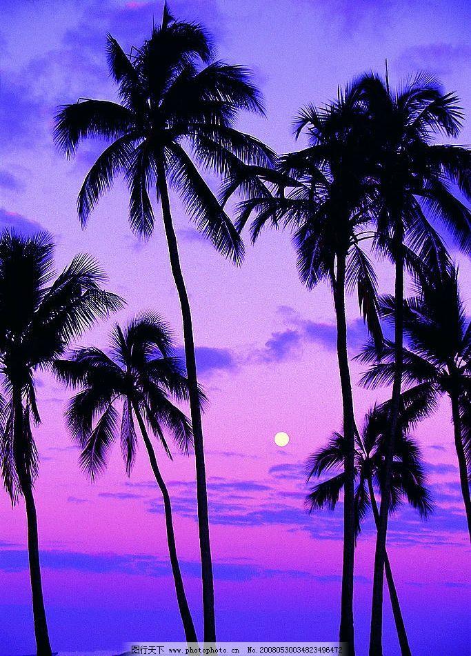 椰子树 黄昏 海边 日落 沙滩 晚霞 自然景观 自然风景 摄影图库 72 jp