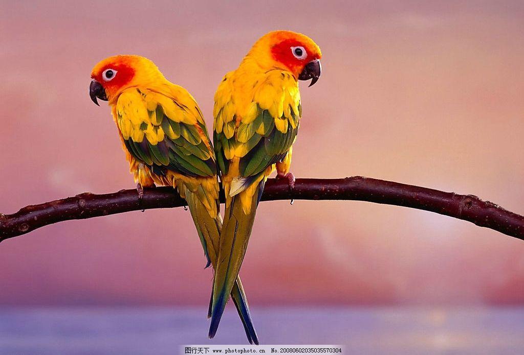 劳伦兹动物笑谈鹦鹉