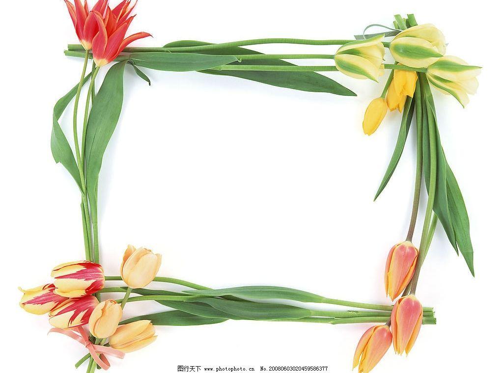 鲜花边框图片