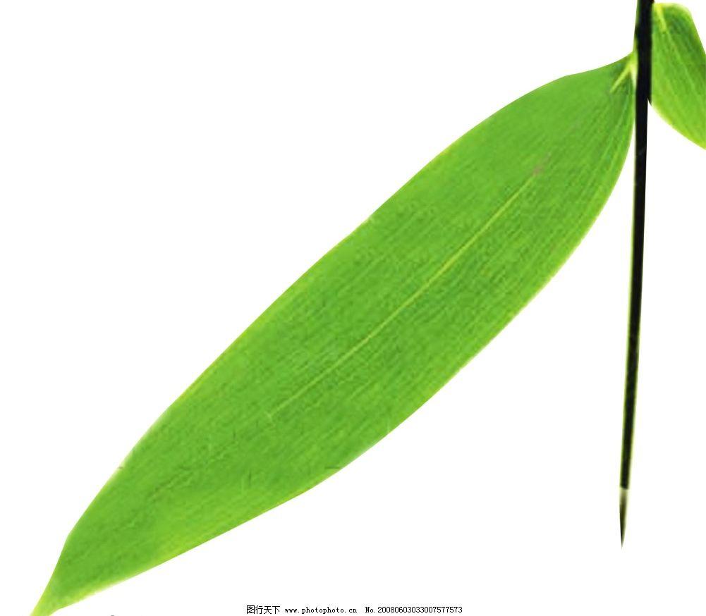 ps竹子植物素材