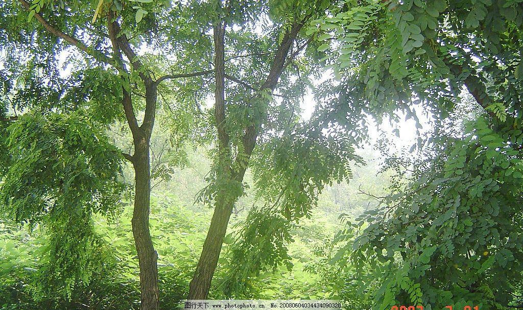 树林 树木 自然景观 山水风景 摄影图库 72 jpg