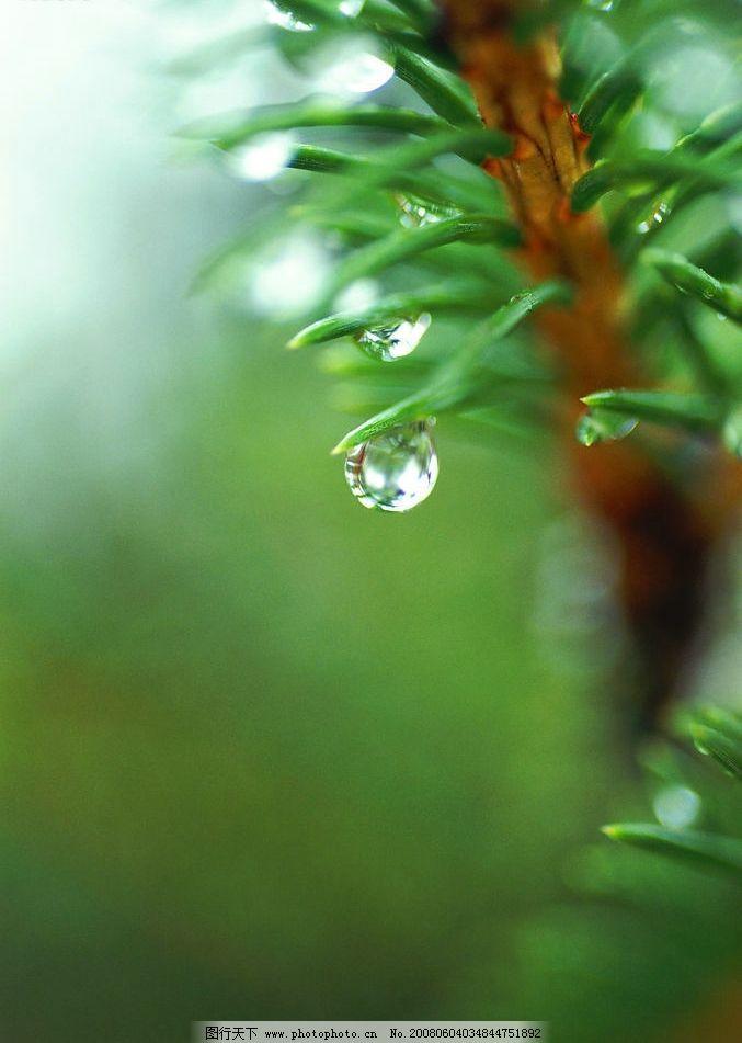 植物露珠 高清图 自然景观 自然风景 摄影图库