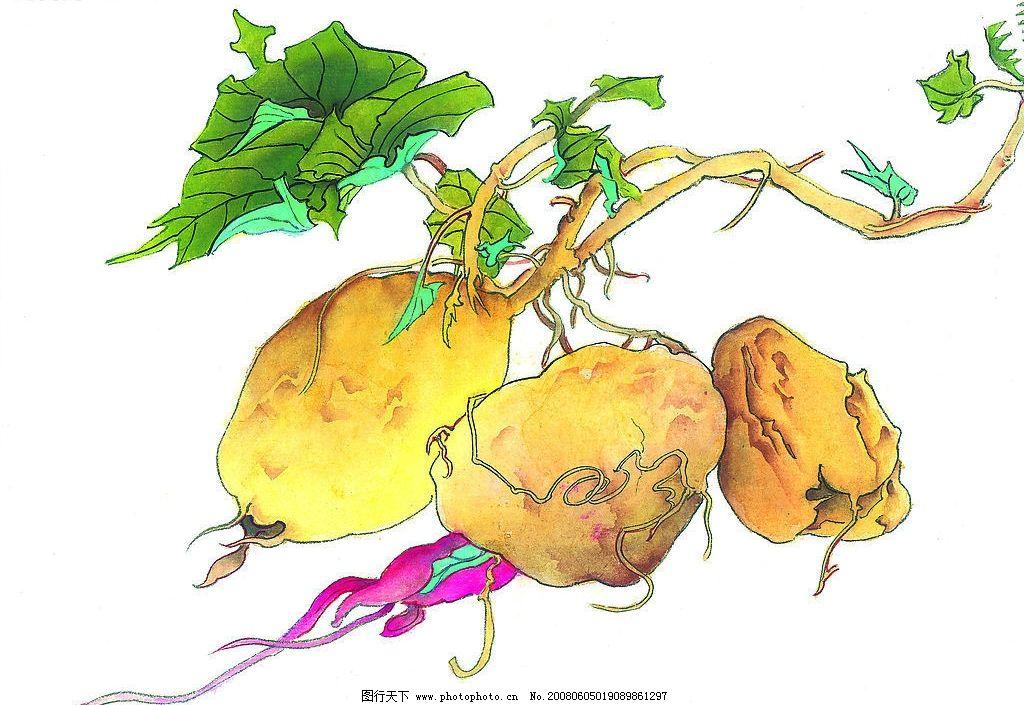 蔬菜彩色手绘画