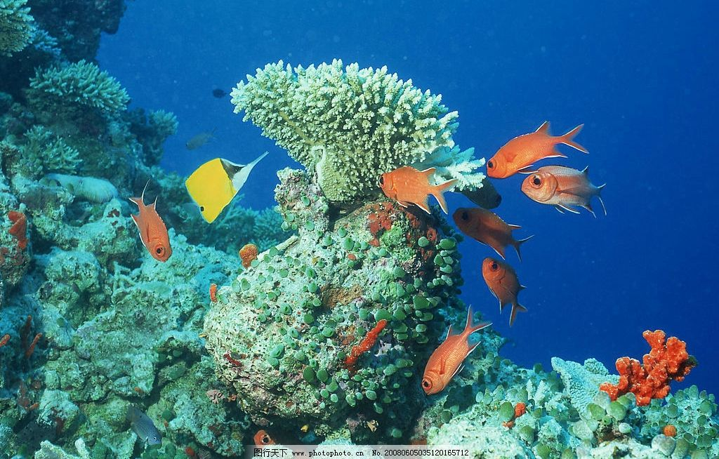 壁纸 海底 海底世界 海洋馆 水族馆 桌面 1024_654