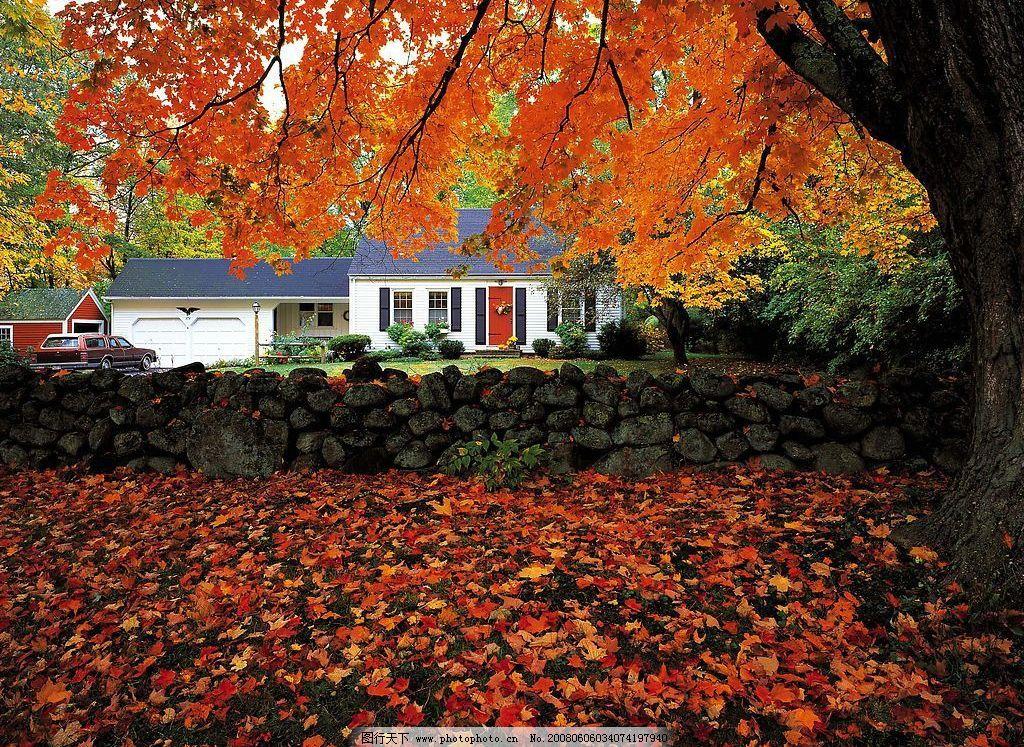 美国风景 秋天枫叶红色落叶住宅景观 旅游摄影 国外旅游 摄影图库 350