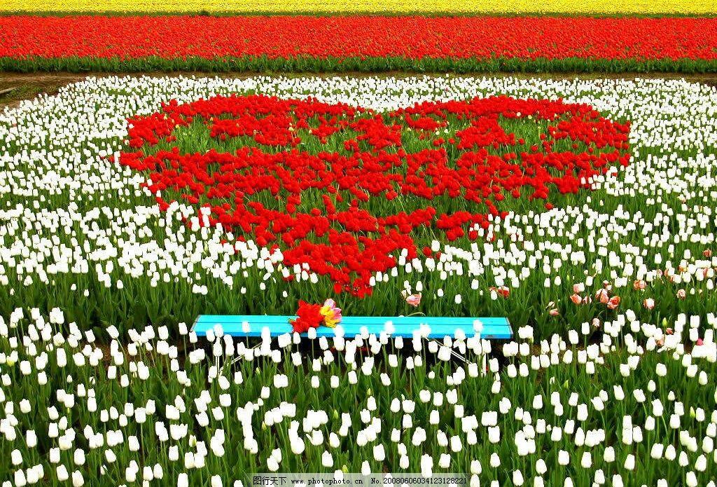 设计图库 自然景观 自然风景  心形花朵 心形 花朵 红色花朵 幸福的感