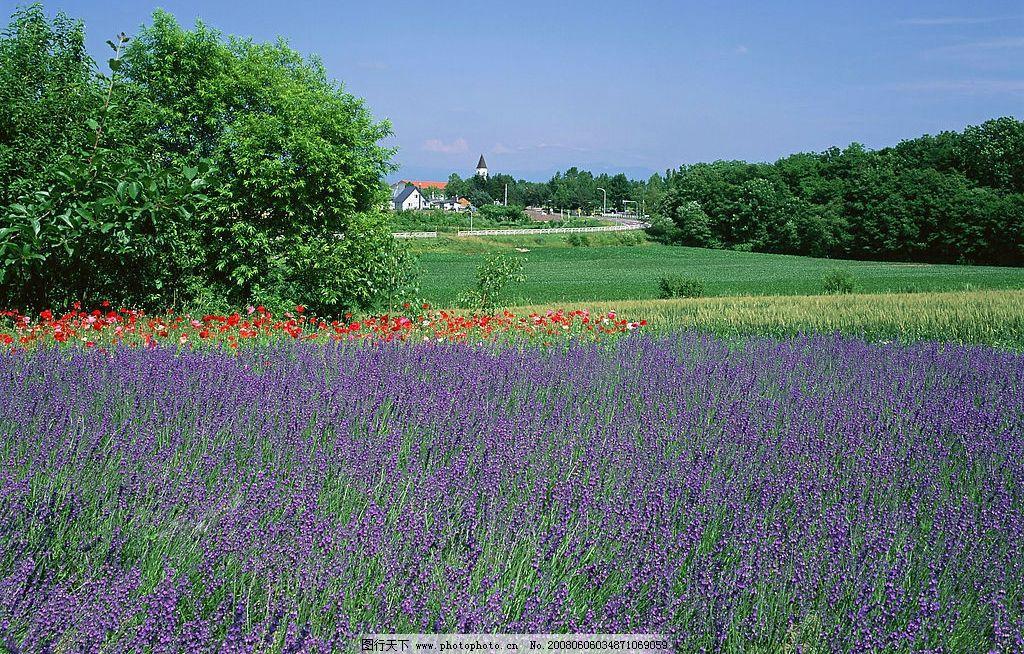 山丘美景篇 藍天白云 鮮花樹林 自然景觀 自然風景 攝影圖庫