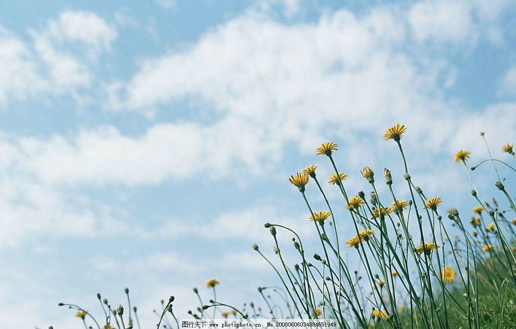 野菊花 自然 自然景观 自然风景 静物 摄影图库 350 jpg
