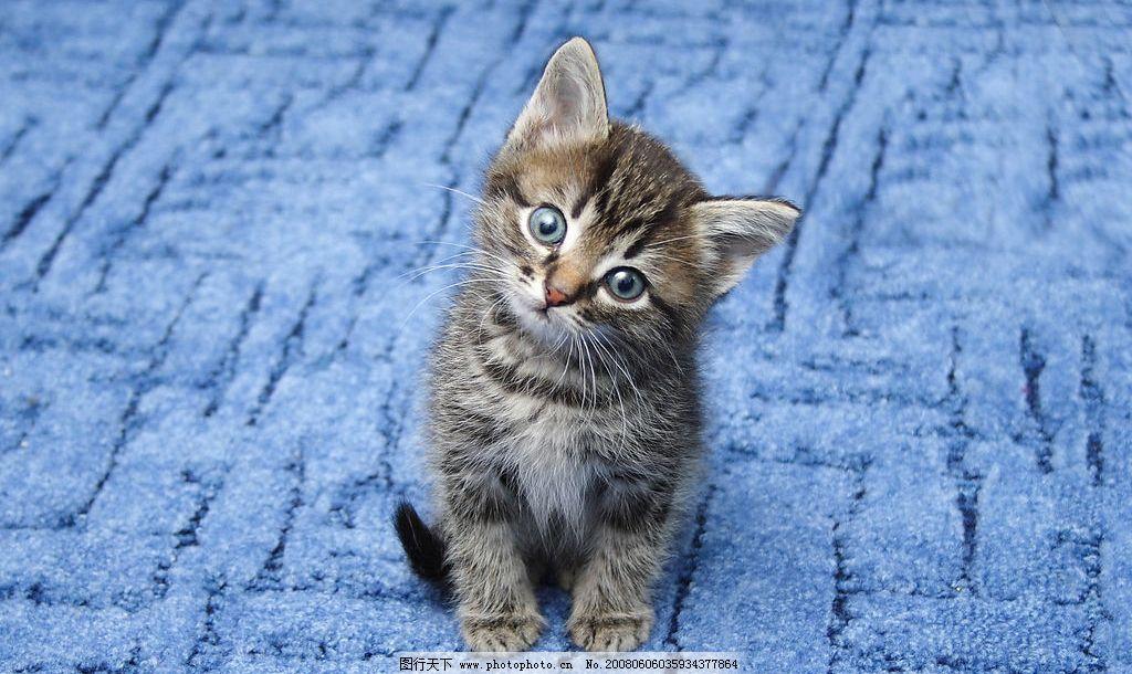 猫咪 家禽家畜 摄影图库 动物 生物世界 猫 动物素材 jpg 家禽家畜