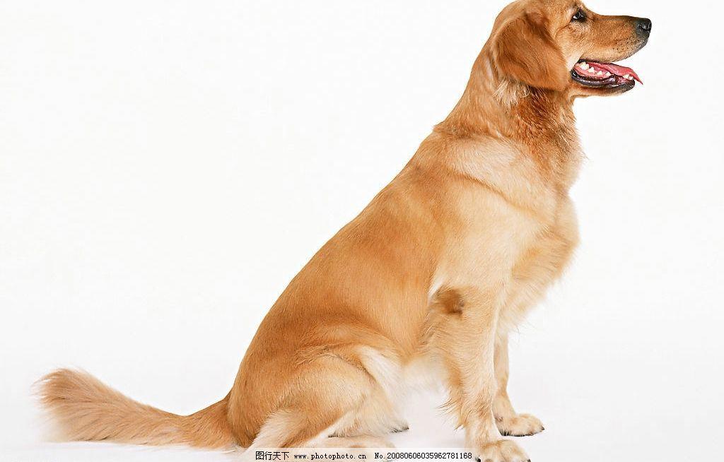 宠物狗 可爱 狗 生物世界 家禽家畜 可爱狗狗 摄影图库 350 jpg