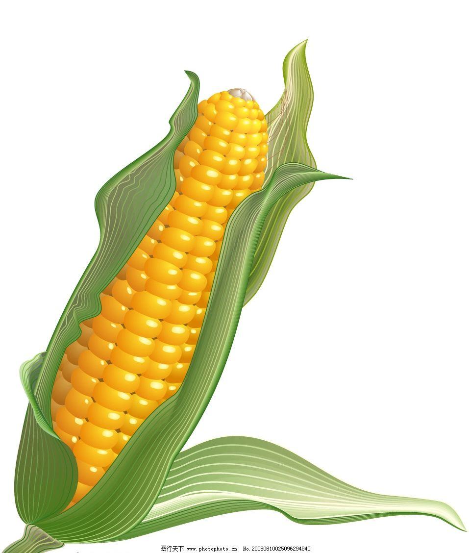 彩铅手绘玉米作品