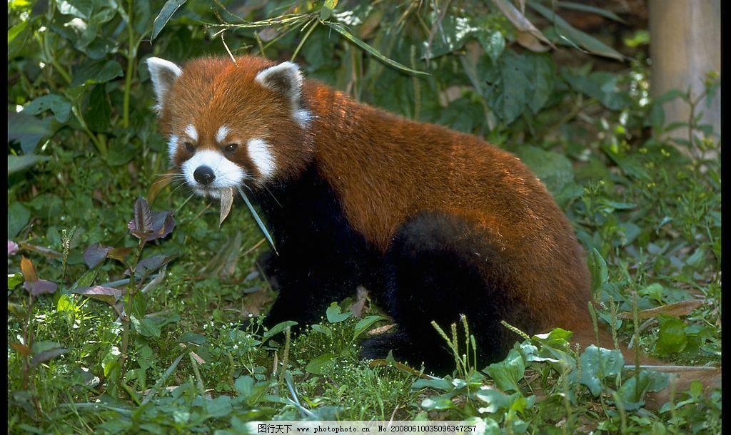 珍稀野生动物图片