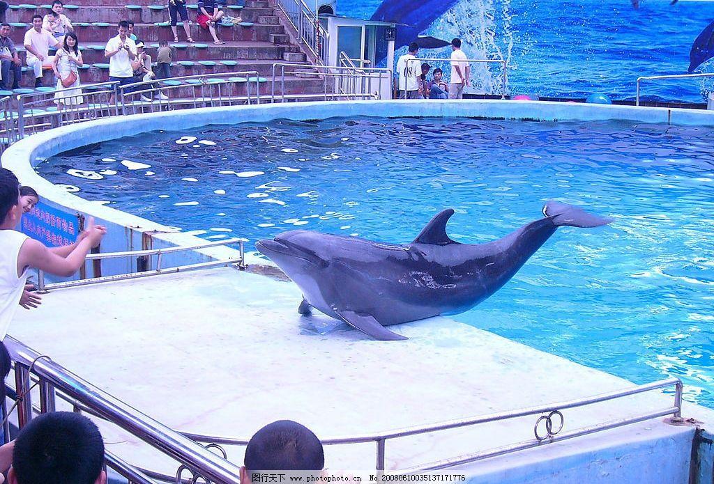 动物 动物园的海豚 游人 池水 生物世界 海洋生物 摄影图库 72 jpg