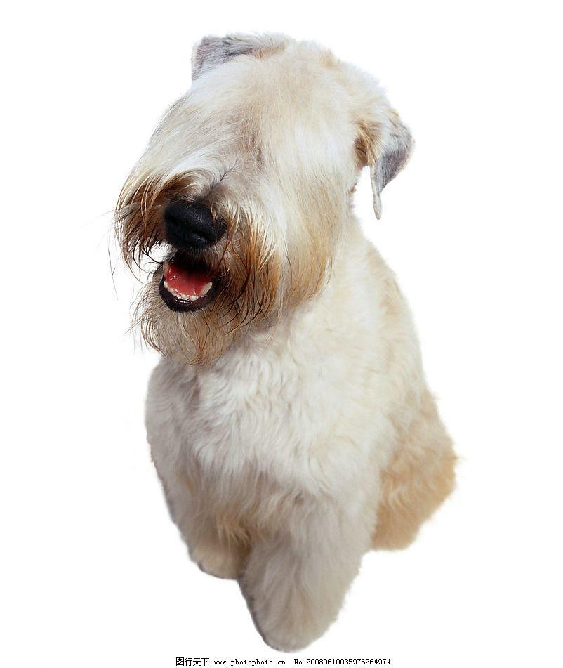 宠物狗 小狗 可爱狗狗 摄影图库