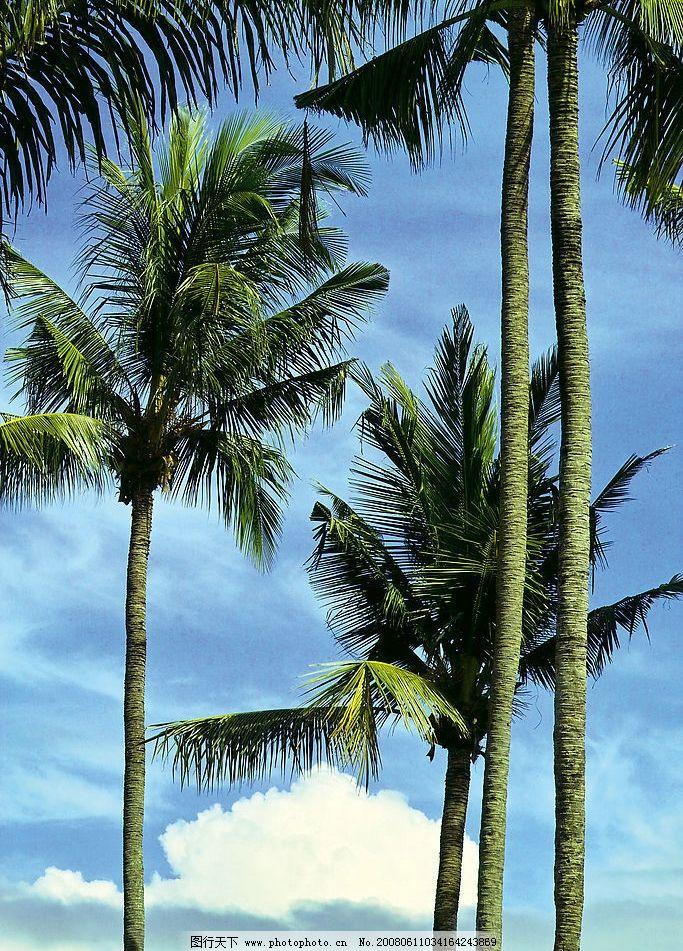 椰树 蓝天 旅游摄影 自然风景 夏天海滩 摄影图库 304 jpg 摄影 304