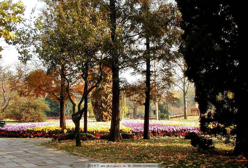 深秋的公园 树木 落叶 自然景观 自然风景 树木池塘 摄影图库 72 jpg