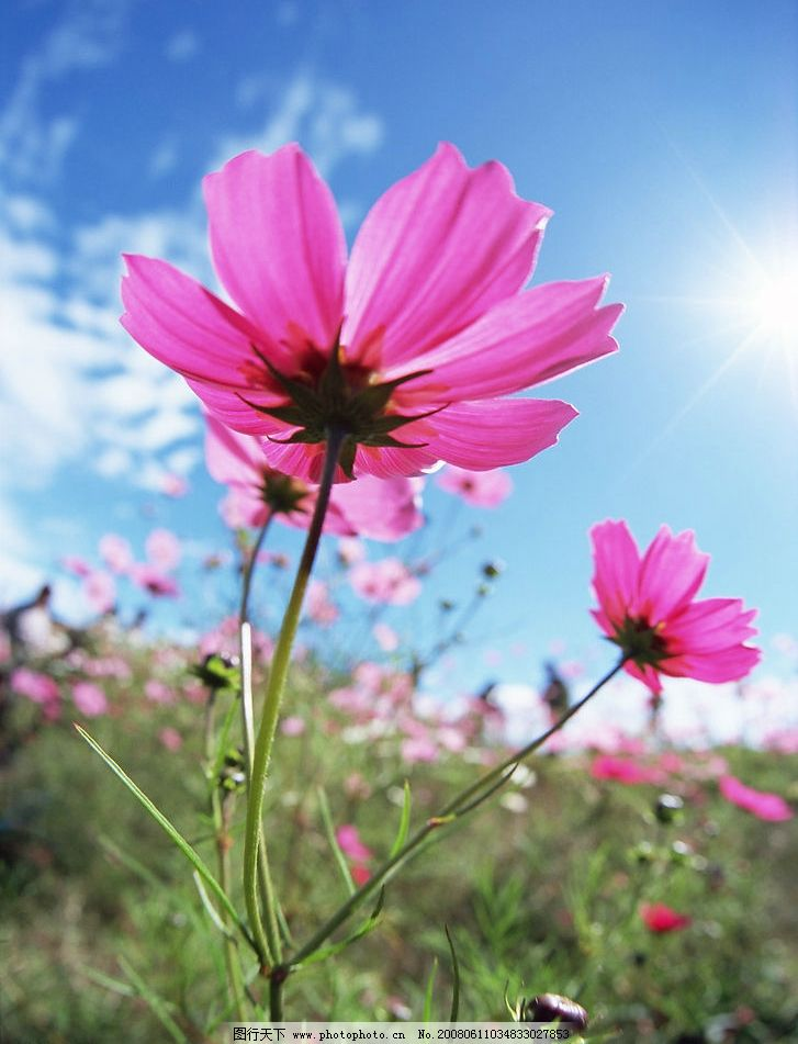 花草 花朵 蓝天 白云 阳光 小草 自然景观 自然风景 摄影图库 350 jpg