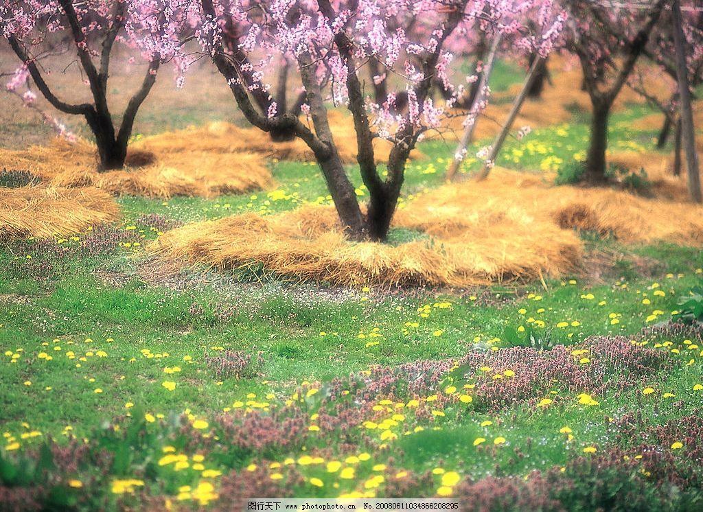 风景花草树木图片