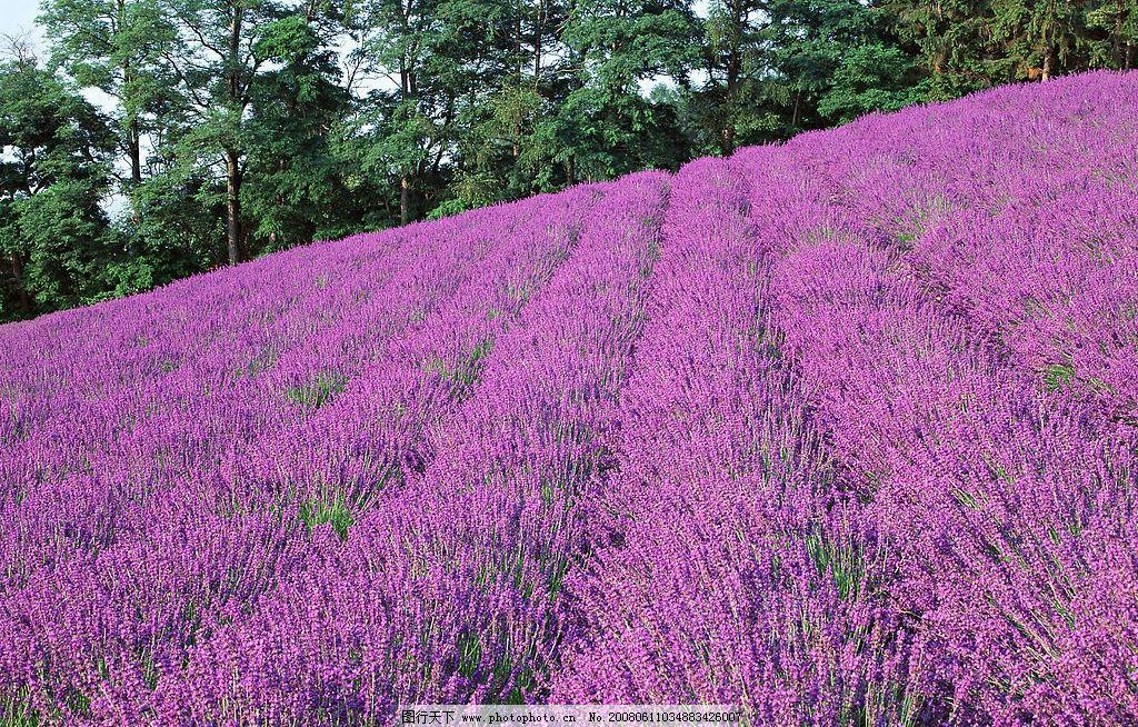 美景 鲜花 蓝天白云 自然景观 自然风景 山丘美景篇 摄影图库