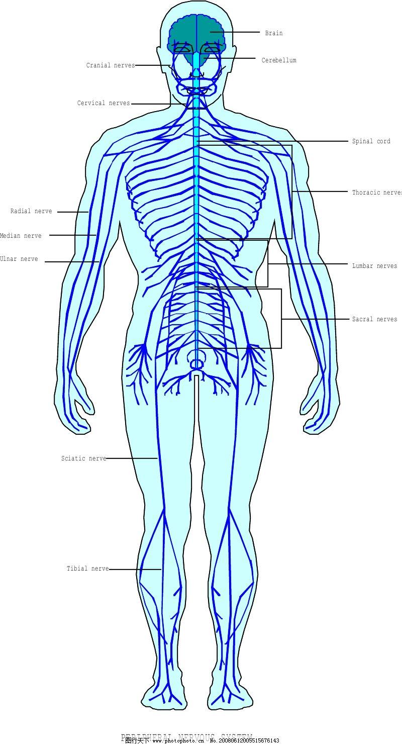 带子怎么去内脏图解