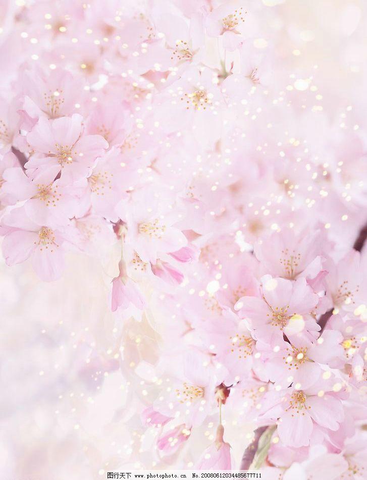 梦幻樱花 粉色 樱花 浪漫 梦幻 唯美 自然景观 山水风景 摄影图库 350