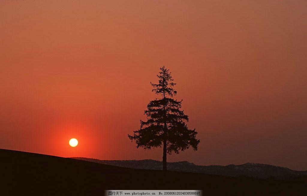 自然风景 黄昏 夕阳 落日 松树 山脉 晚霞 自然景观 摄影图库 350 jpg
